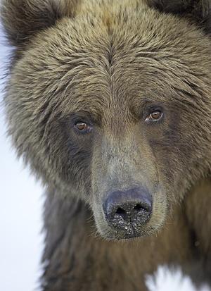 Being fearfully greedy: Why I buy in bear markets