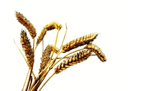 How to harvest wheat and mine gold using ETCs