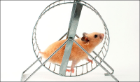 Share trading hamster