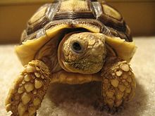 Trade as rarely as a tortoise and you could reduce your capital gains tax bill