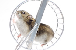 Hamster on a wheel: At least he doesn't pay income tax