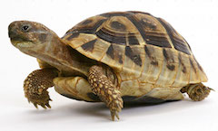 Slow coach: The Innovative Finance ISA has been delayed