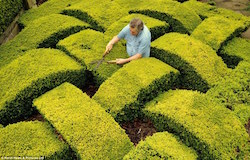 A man doing some hedging.